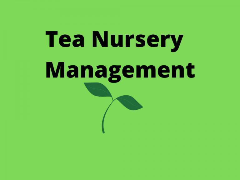Tea Nursery Management